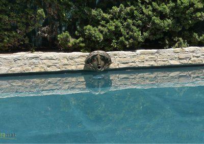 Réalisation bassin de piscine en feuille de pierre détail sculpture